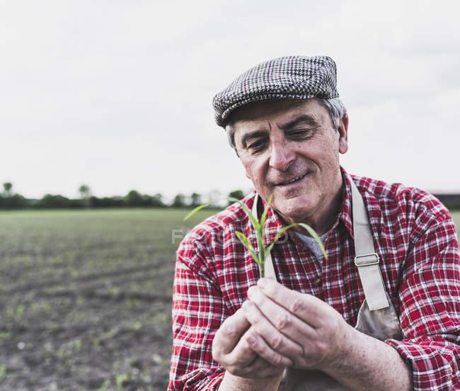 Bauer auf einem Feld Prüfung Ernte — Stockfoto