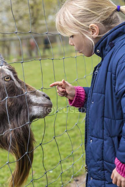 Blond petite fille caressant chèvre pygmée — Photo de stock