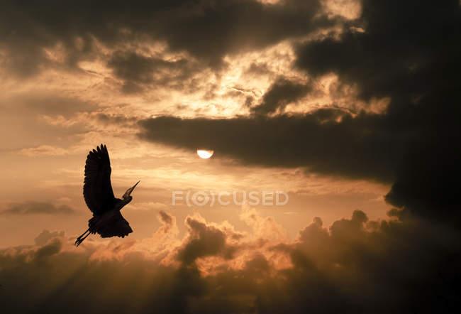 Kran bei Sonnenuntergang, dramatische bewölkte Atmosphäre — Stockfoto