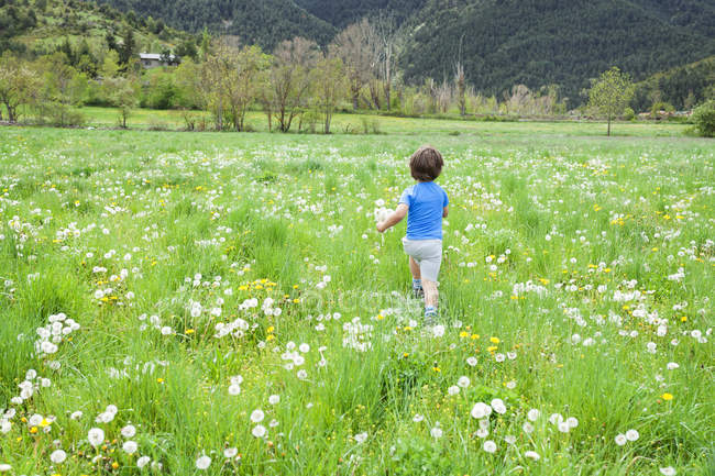 Мальчик с одуванчиками бежит по лугу — стоковое фото