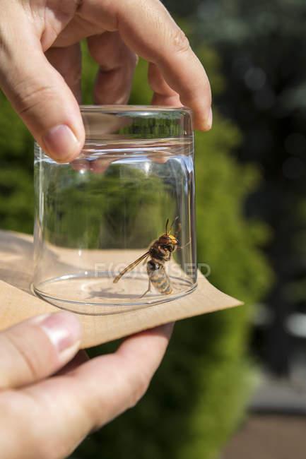 Крупним планом чоловік випускають послугами hornet — стокове фото