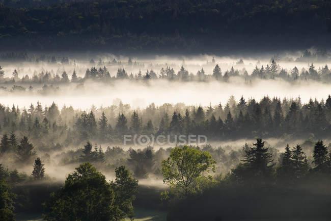 Germany, Bavaria, Pupplinger Au, morning mist at Isar floodplains — Stock Photo