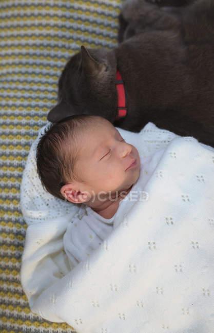 Neugeborenes Mädchen schläft auf der Couch neben einer grauen Katze — Stockfoto
