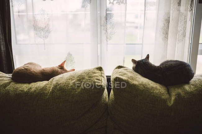 Back view of two cats sleeping on the backrest of a couch in front of a window — Stock Photo