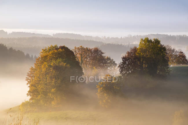 Германия, Бавария, Pfaffenwinkel, Aidling, Aidlinger Hoehe, туман утром — стоковое фото
