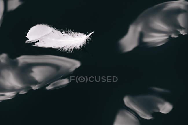 Plume de cygne flottant dans l'eau — Photo de stock