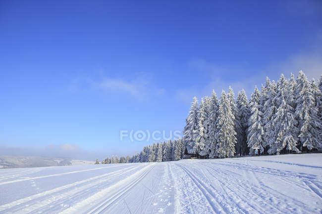 Faixas de floresta invernal de Alemanha, Turíngia, com ski perto Masserberg — Fotografia de Stock