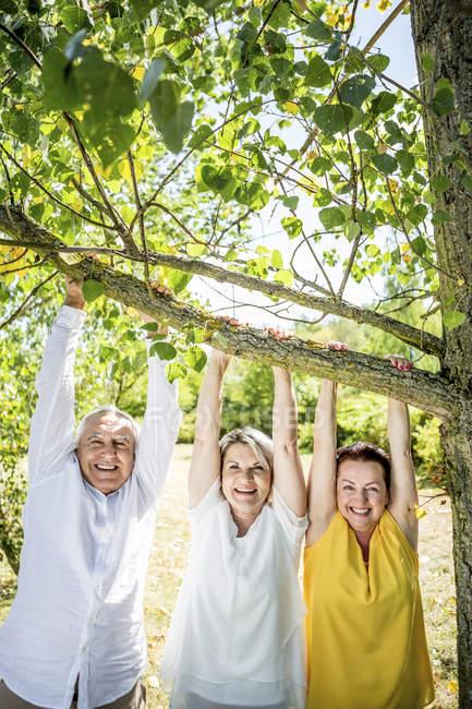 Счастливые пожилые друзья, висящие на ветке дерева — стоковое фото