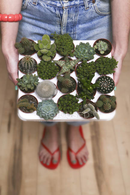 Hipster young woman with tray cacti and succulents — Stock Photo