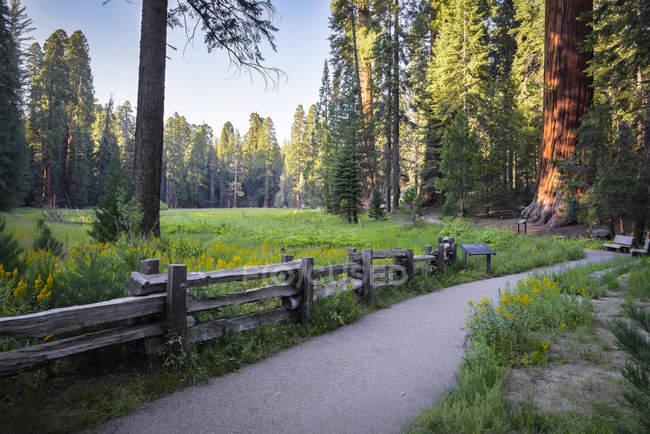 США, Каліфорнія, Національний парк Секвойя, велике дерево ходити — стокове фото
