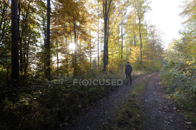 Back view of man standing on forest track in autumn — Stock Photo
