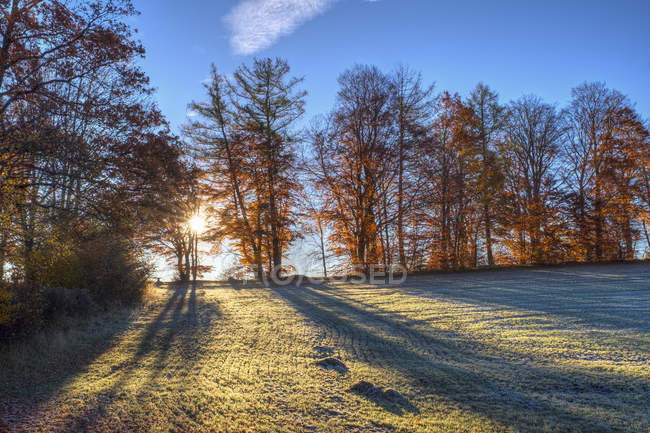 Germany, Bavaria, near Icking, Beech trees and morning mood — Stock Photo