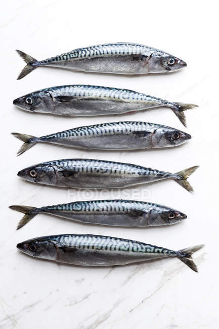 Row of six sardines on white marble surface — Stock Photo