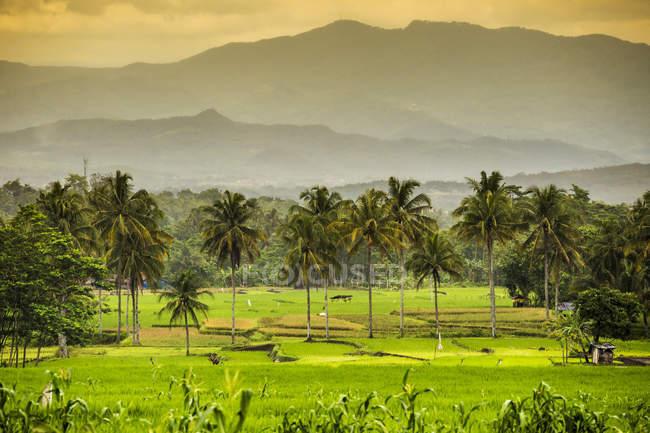 Indonésie, Île de Java, Paysage avec montagnes et palmiers — Photo de stock