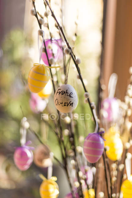 Twigs of pussy willows decorated with Easter eggs — Stock Photo