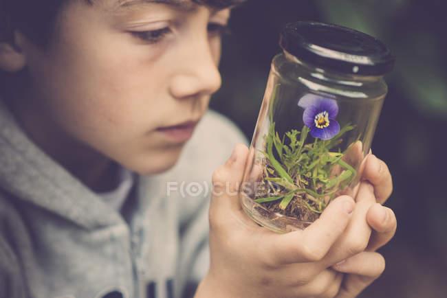 Ragazzo guardando pansy fiore in un bicchiere — Foto stock