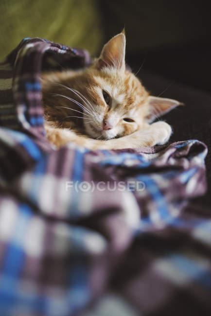 Крупным планом Рыжий котенок, опираясь на одеяло на дому — стоковое фото