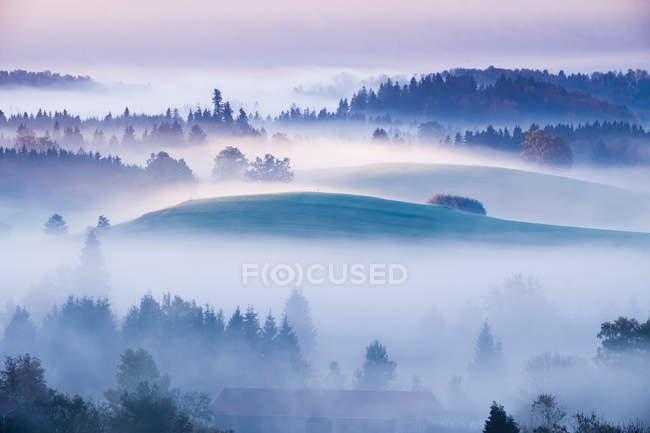 Германия, Бавария, Оффенбах, Айдлинг, Айду Ходжсон, утренний туман — стоковое фото