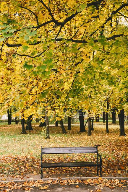 Banco de madeira sob a árvore de Outono colorido — Fotografia de Stock