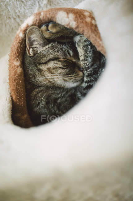 Close-up of cute tabby cat sleeping in burrow — Stock Photo