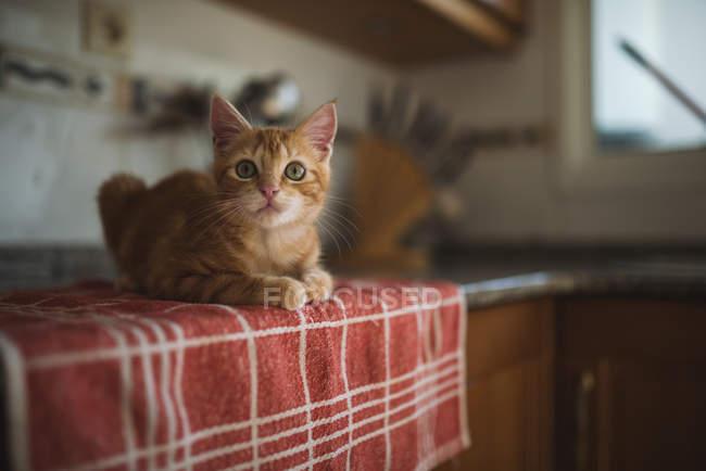 Little kitten sitting on tablecloth in kitchen — Stock Photo