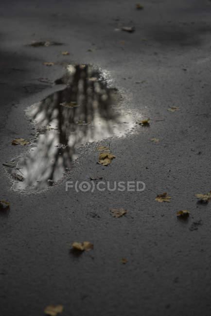 Puddle on asphalt road at gloomy weather — Stock Photo