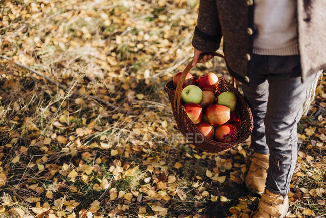 Boy carrying basket full of apples on forest path with autumn leaves — Stock Photo