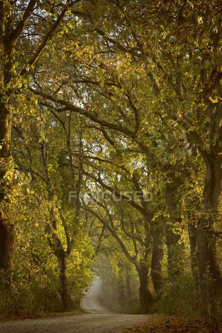 Italie, Toscane, Val d'Orcia, route bordée d'arbres pendant la journée — Photo de stock