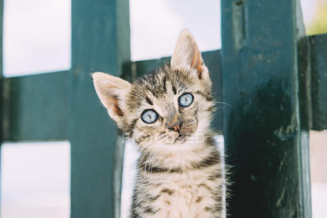 Portrait of tabby kitten in front of  green fence — Stock Photo