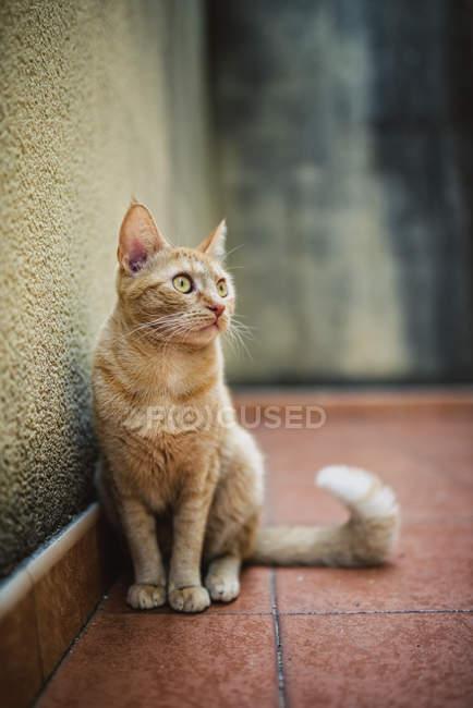 Ingwer Katze auf Terrasse und wegsehen — Stockfoto
