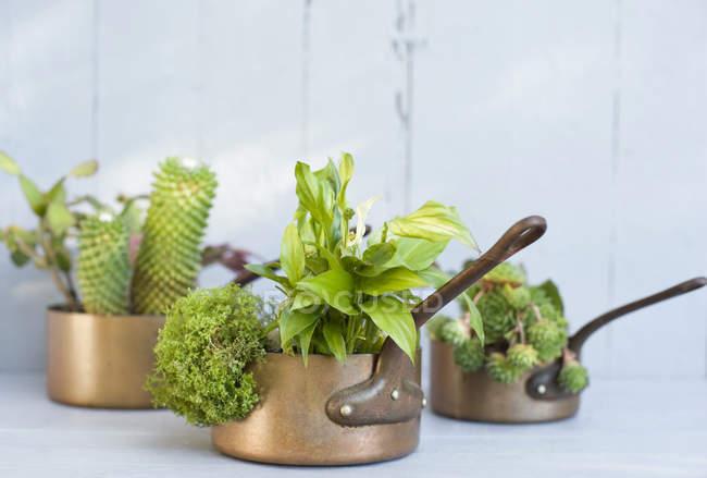 Spathiphyllum, Sukkulenten und Kakteen in Metall Töpfe gepflanzt — Stockfoto