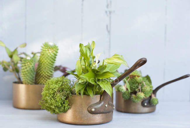 Succulents, cacti and spathiphyllum planted in metal pots — Stock Photo
