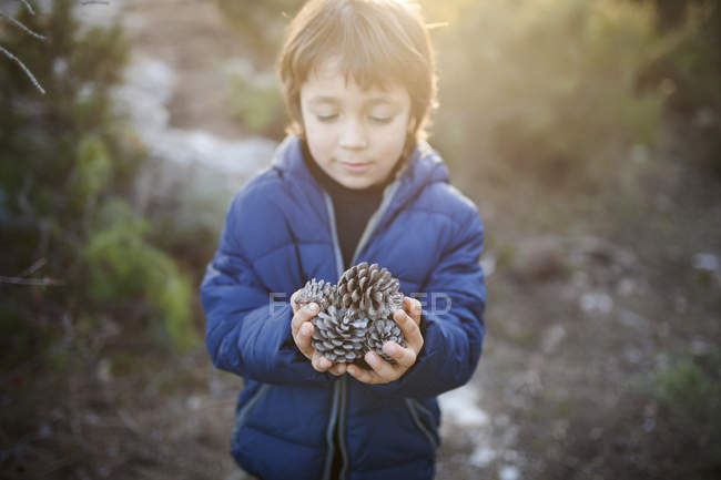 Little boy with handful of fir cones — Stock Photo