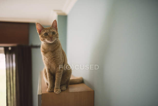 Portrait of starring tabby cat sitting on top of cabinet at home — Stock Photo