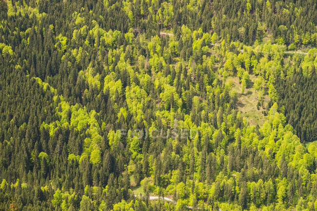 Germany, Bavaria, Allgaeu Alps, Nagelfluhkette, view to forest at Steigbachtal — Stock Photo