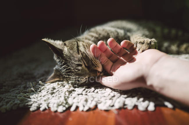 Close-up of human hand stroking tabby cat lying on blanket — Stock Photo