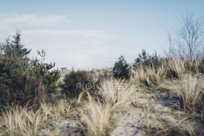 Denmark, Hals, dunes at the Baltic Sea — Stock Photo