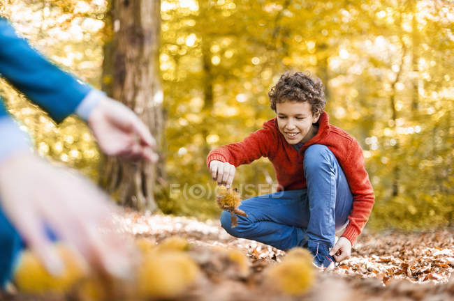 Smiling boy collecting sweet chestnuts in forest — Stock Photo