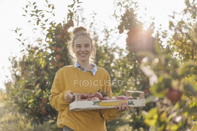 Young woman standing with crate of fresh picked apples — Stock Photo