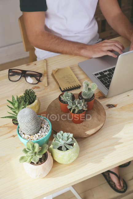 Young man using laptop on desk with potted cacti — Stock Photo