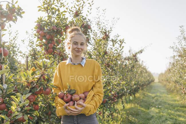 Молодая женщина держит яблоки в саду — стоковое фото