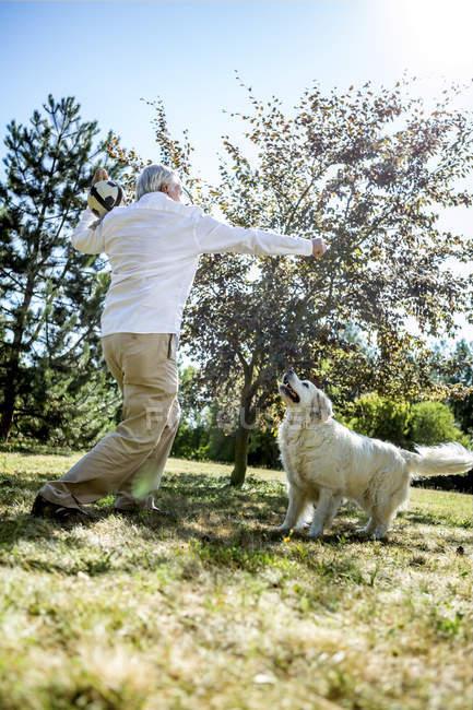Senior homme jouer avec chien sur une prairie — Photo de stock
