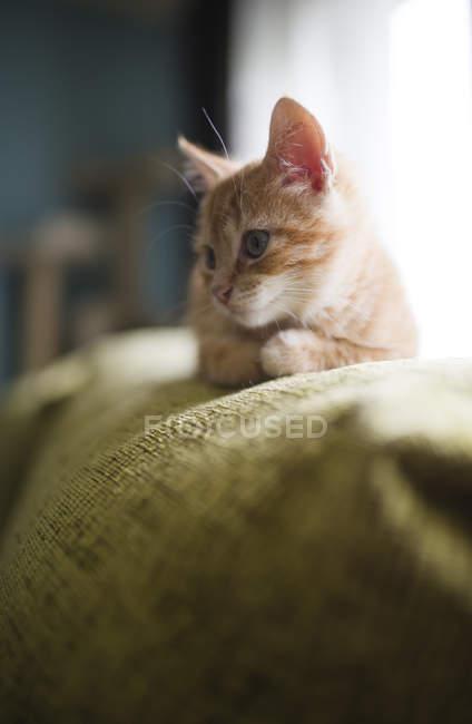 Рыжий котенок, опираясь на одеяло на диване — стоковое фото