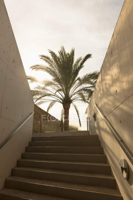 Palm tree up the stairs in sunshine with shadow — Stock Photo