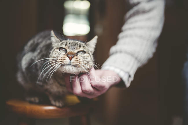 Close-up of human hand stroking tabby cat sitting on chair — Stock Photo
