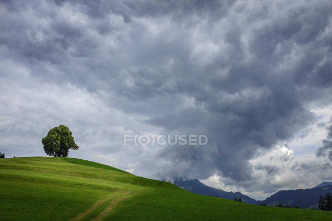 Germany, Bavaria, Wittelsbacher Hoehe, green field with tree under cloudy sky — Stock Photo
