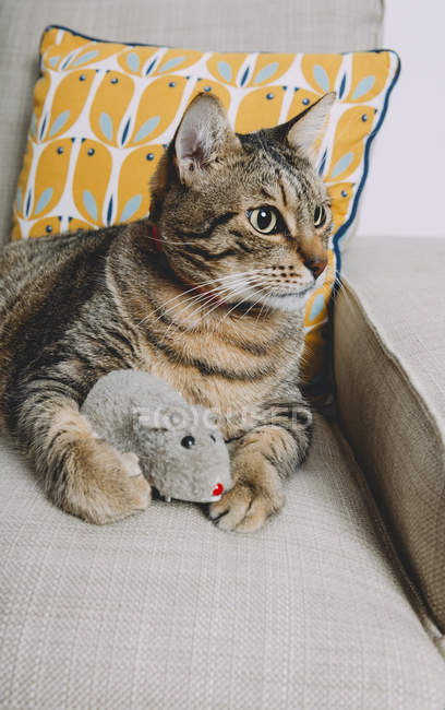 Tabby cat lying on armchair with toy rat watching something — Stock Photo