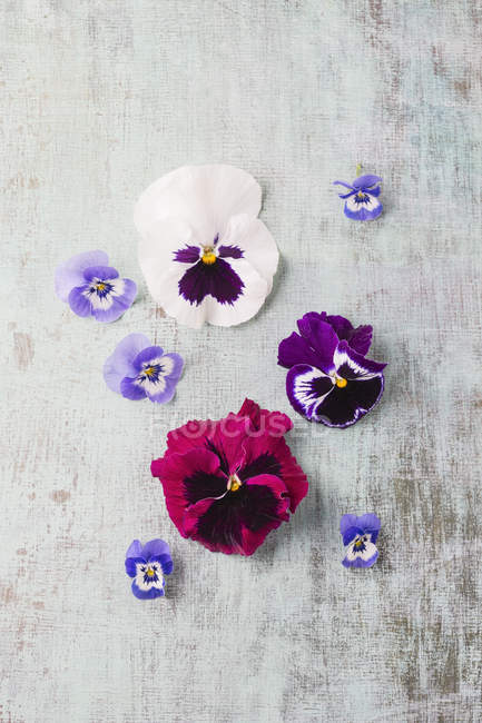 Edible pansies and violets placed on surface — Stock Photo