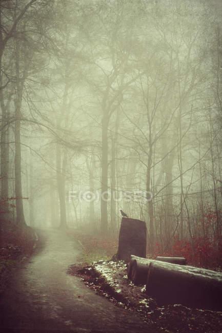 Alemanha, trilha florestal no nevoeiro — Fotografia de Stock