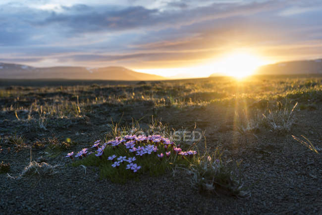 Iceland, Golden Circle National Park at midnight sun over meadow — Stock Photo